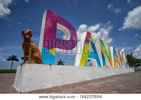 June 23 2016 Panama City Panama: the Panama sign on the Cinta Costera way in downtown with a Vizsla dog sitting on the base of it