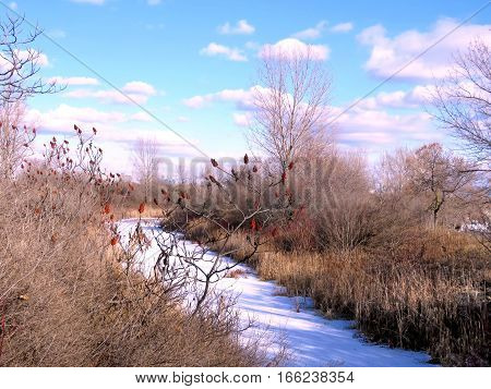 Frozen riverl in Humber Bay Park on a shore of the Lake Ontario in Toronto Canada January 6 2017