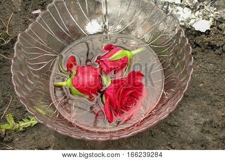 roses floating in a bowl of water