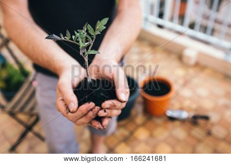 Photo of Adult man planting tomatoes on his balcony