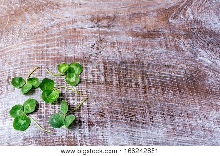 Clover on dark old wooden background. St. Patricks day greeting card. Three-leaves shamrock Irish festival symbol. Copy space.