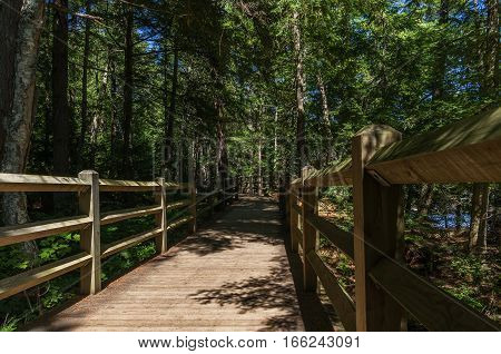 Path in Tahquamenon Falls State Park in Northern Michigan