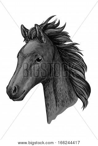 Black horse portrait. Stallion modestly looking down with wavy mane. Artistic vector sketch portrait