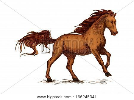 Brown arabian mustang stallion racing or galloping. Color horse vector sketch for equestrian sport, horse riding, equine design poster