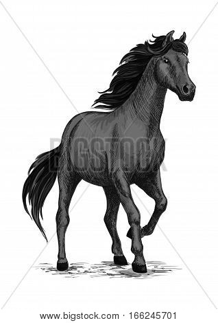 Wild black mustang stallion standing and stomping with hoof. For equestrian sport and hose riding, equine design. Black horse sketch poster