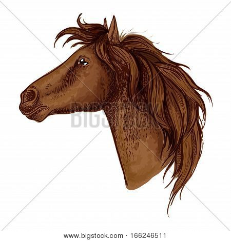 Horse royal noble profile portrait. Brown mustang with calm and proud look