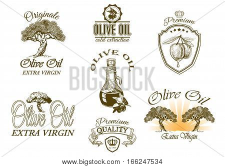 Vector vintage style olive oil decorative elements and symbols set. Graphic design for virgin olive oil packaging isolated on white background. Can be used as logo