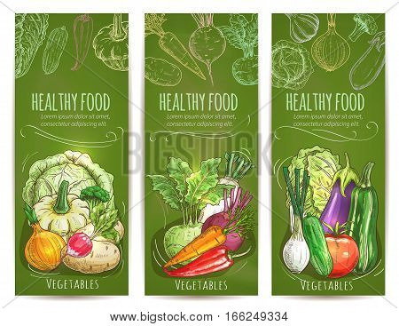 Healthy food banners set. Chalk sketch vegetables cabbage, squash and onion, radish and, kohlrabi, beet, carrot, chili and bell pepper. Leek, cucumber, tomato and eggplant, zucchini and chinese cabbage napa vector vegetables on green chalkboard