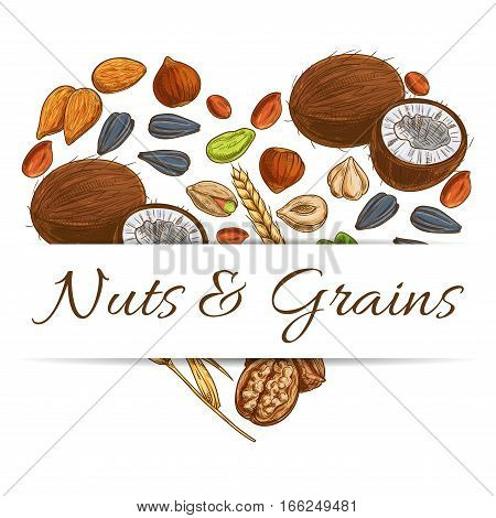Heart made up of nut, grain, seed and bean. Love healthy food poster with almond and peanut, hazelnut and pistachio, walnut, coconut, wheat ear, sunflower seed. Vegetarian dessert, snack design