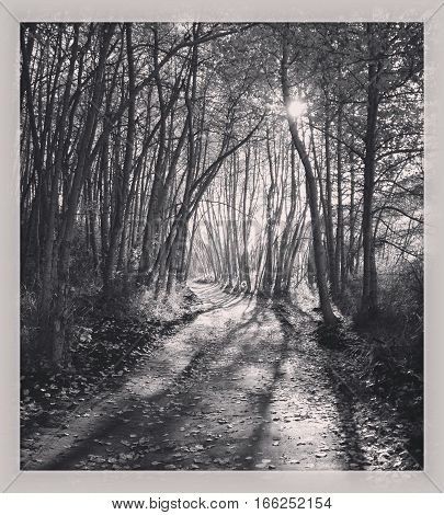 Peaceful Forest Trail - Black And White