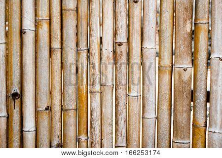 Background Bamboo Fence.