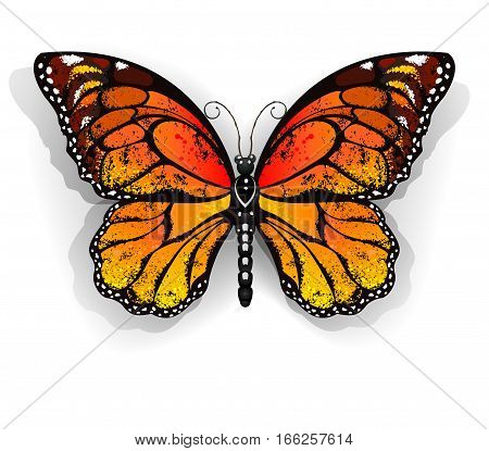 Orange realistic monarch butterfly on a white background. Monarch. Design with butterflies.