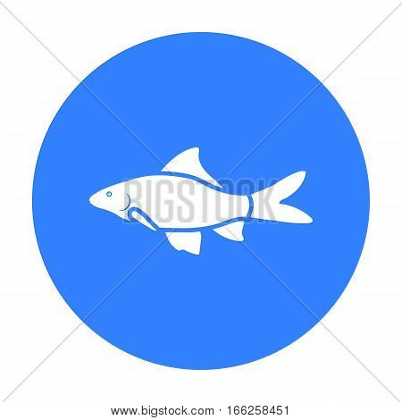 Red Tail Shark fish icon blue. Singe aquarium fish icon from the sea, ocean life black.