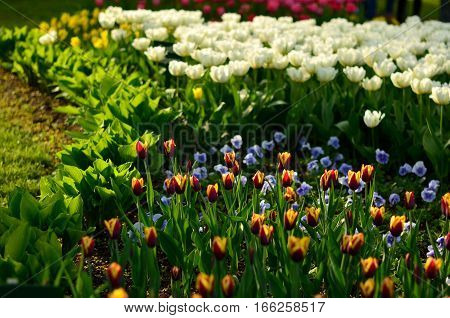 Beautiful Spring Flowers Growing On The Flowerbed In The Garden