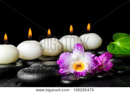 Spa Still Life Of Purple Orchid Dendrobium, Leaf With Dew And Row White Candles On Black Zen Stones,
