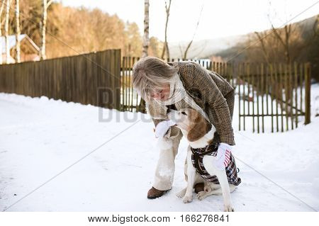 Beautiful senior woman on a walk with her dog in sunny winter nature.
