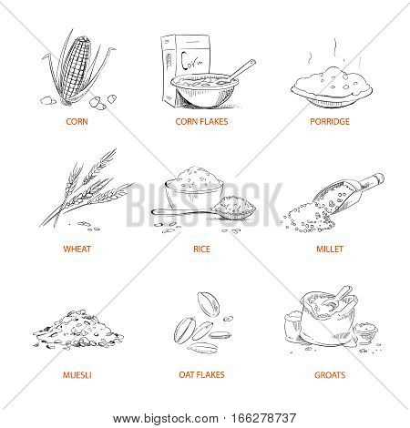 Doodle cereals groats, porridge, muesli, cornflakes, oat and rye, wheat and barley, millet or buckwheat, rice, corn vector. Set of cereals sketch. Vector illustration