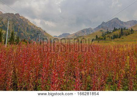 Red Plants At The Mountains, Tien Shan Mountains Shymbulak Ski Resort, Almaty, Kazakhstan