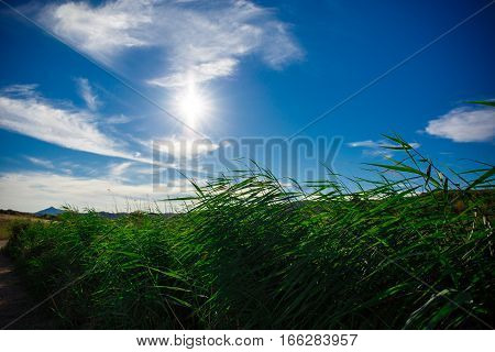 Green plant on a background of the bright sun
