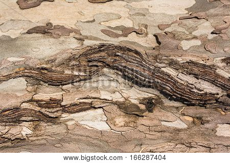 old flawed tree bark texture, wooden backdrop