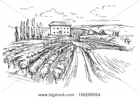 Vineyard hand drawn vector illustration realistic sketch