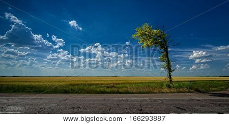 Lonely tree on the road on a background of clouds