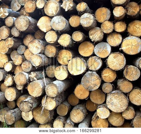Many sawed pine logs stacked in a pile horizontal front view closeup