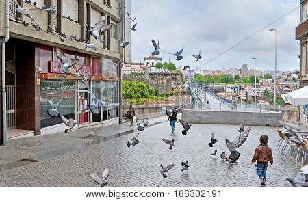 The Street With Flying Pigeons