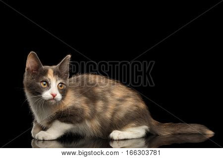 Little Ginger with white kitty sitting and looking up isolated black background, side view