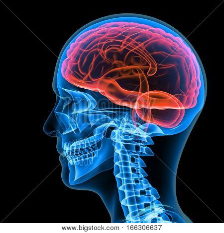 The human skull is a bony structure, the head in the skeleton, which supports the structures of the face and forms a cavity for the brain.