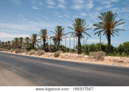 Asphalt road with palm in the desert