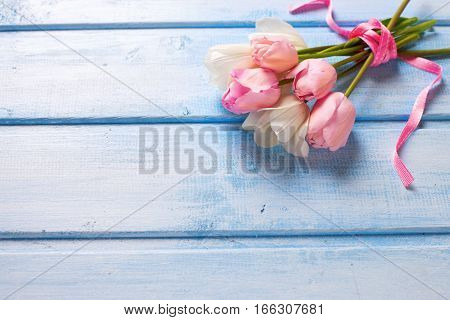 Bunch from spring white and pink tulips on blue wooden background. Selective focus. Place for text