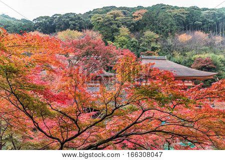 Kiyomizu-dera temple in autum season in Kyoto Japan.