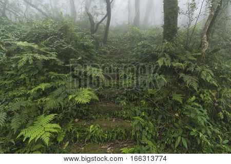the view of tropical rain forest in Asia