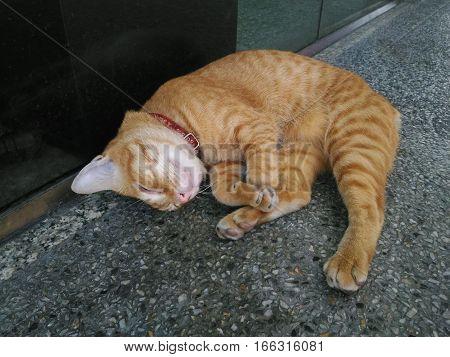 Relax brown Tabby cat sleeping on floor