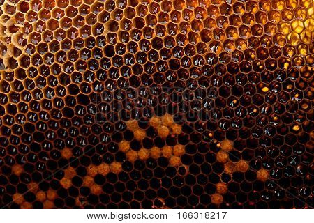 View Of The Honeycomb With Sweet Honey.