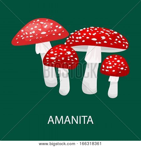 Amanita muscaria, a poisonous mushroom in a forest. Wild Foraged Mushroom, Vector isolated edible natural mushrooms in nature set
