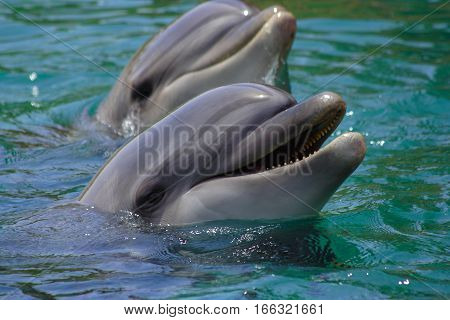 Dolphin swims in the sea, portrait, smiling dolphins