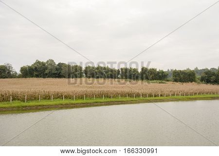 Dry corn field with the River and sky