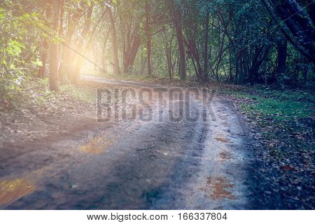 Winding gravel road through temperate rainforest. forest background.