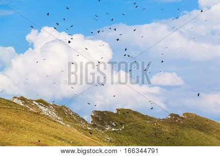 View of Alps and birds at the Rochers de Naye Switzerland