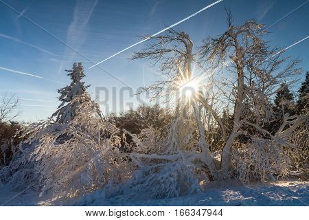 Trees in the snow at the top of the Feldberg Hesse Germany