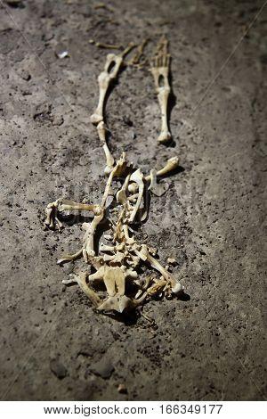 Skeleton of frog in old abandoned tunnel