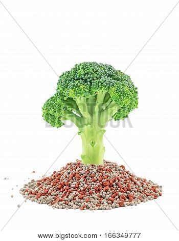 Green Broccoli Closeup On The Mineral Fertilizers