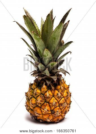 Nano pineapple on white. Ananas is a plant genus of the Bromeliad family (Bromeliaceae), native to South America and Central America which includes the species Ananas comosus, the pineapple.