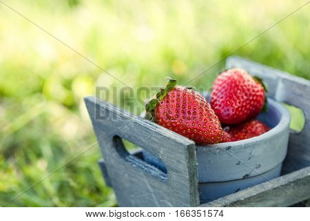Fresh fruit. Strawberries in grass Spring fruit. Spring nature