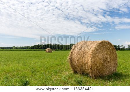 Golden hay bales in a green field with focus on foreground bale. Rural landscape with warm light and copy space in sky if needed.