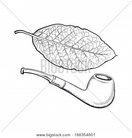 Luxurious wooden varnished smoking pipe and dry tobacco leaf, sketch vector illustration isolated on white background. Realistic hand-drawing of retro wooden smoking pipe and tobacco leaf