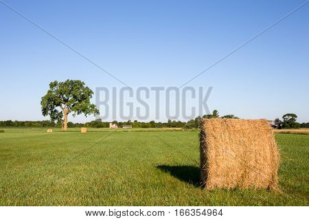 Golden hay bales in a green field. Focus on foreground bale with large tree and a farm in the background. Copy space in sky if needed.