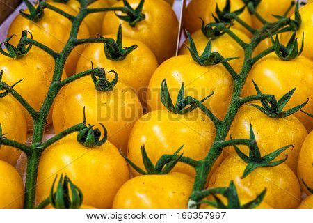 Pachino tomatoes yellow, Tomato of Pachino background. Macro. The Pomodoro di Pachino (Tomato of Pachino) is an IGP/PGI for tomatoes from the southeast coast of Sicily, Italy. Background with many tomatoes in more lines.